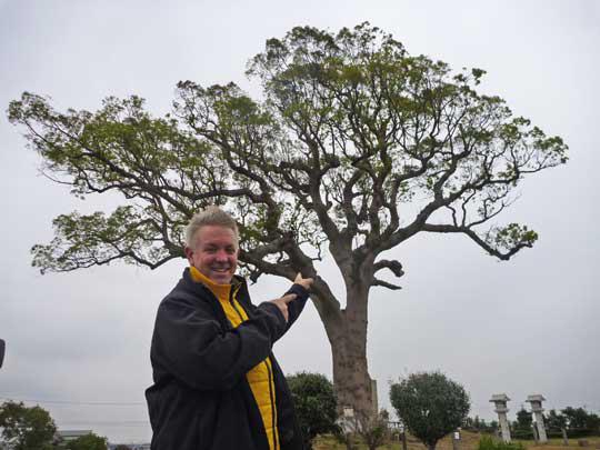 鈴鹿のもう一つの名所、長太の大楠 樹齢1000年。 田んぼのど真ん中にすっくと立っていつも見守っている。